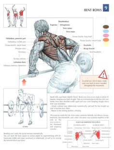 Bent Over Barbell Rows ~ Re-Pinned by Crossed Irons Fitness