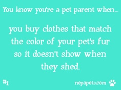 #1 you buy clothes that match the color of your pet's fur so it doesn't show when they shed.