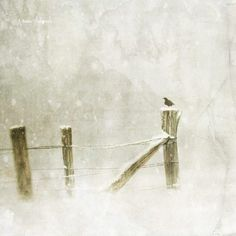 Jamie Heiden, '(minus) Six Degrees of Separation'….an exercise in patience. On so many levels. on ArtStack #jamie-heiden #art