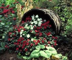 Do you have a whiskey barrel planter in your garden? Are these planters just common in the United States or are they all over the world? Whiskey Barrel Planter, Whiskey Barrels, Half Barrel Planter Ideas, Half Wine Barrel Ideas, Large Terracotta Pots, Barrel Flowers, Shade Garden, Flower Beds, Dream Garden