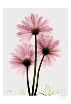 gerbera daisy watercolor tattoo - Google Search
