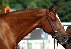 horsemane pulling tools - Google Search