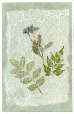Carte de fleur pressée - Irene's Cards, Etc. Dried And Pressed Flowers, Pressed Flower Art, Pressed Leaves, Diy Flowers, Paper Flowers, Material Flowers, Fleurs Diy, Leaf Cards, Newspaper Crafts