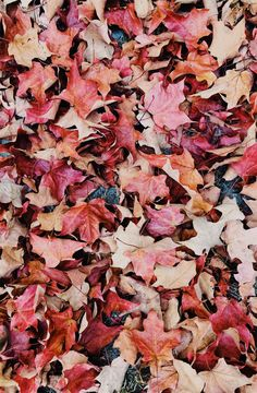 wallpaper Beautiful picture of Autumn leaves - colourful fall leaves What on earth are area rugs any Autumn Leaves Wallpaper, Fall Wallpaper, Wallpaper Pictures, Wallpaper Backgrounds, Iphone Wallpapers, December Wallpaper, Movie Wallpapers, Iphone Backgrounds, Wallpaper Downloads