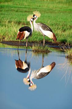 animals of the serengeti and ngorongoro conservation area princeton university press wildguides