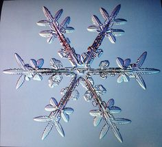 snowflakes under the microscope | Under the microscope, real snowflakes are amazingly intricate. And as ...
