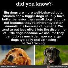 Big dogs are more well-behaved pets. Studies show bigger dogs usually have better behavior than small dogs, but it's not because they're inherently better animals; it's because of humans. We tend to put less effort into the discipline of little dogs. Little Dogs, Big Dogs, I Love Dogs, Small Dogs, The More You Know, Good To Know, Did You Know, Wow Facts, Wtf Fun Facts