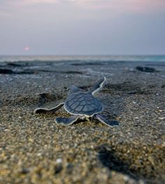The great news is that unlike sea turtles we have the ability to think, adapt and change direction when we realize we are following the wrong path. Description from joelfleischman.com. I searched for this on bing.com/images