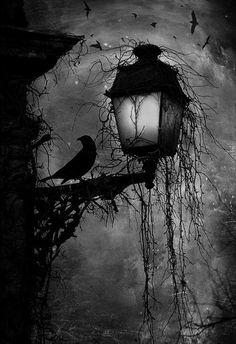 Crow on lamp post at night Dark creepy old London gothic feel. Love the hanging moss and carrion's circling in the back Art Noir, Arte Obscura, Arte Horror, Oeuvre D'art, Cool Art, Graffiti, Art Photography, Illustration Art, Design Illustrations