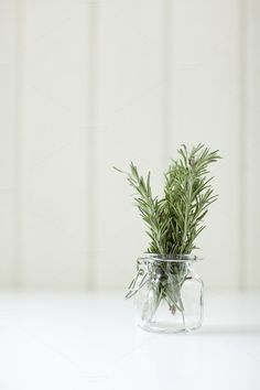 Check out Rosemary in a Small Jar by More Than Cake on Creative Market crtv.mk/c. Minimal Photography, Lifestyle Photography, Food Photography, Jewelry Photography, Iphone Photography, Urban Photography, Slow Living, Glass Vase, Still Life