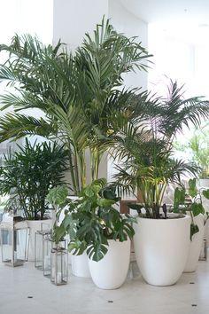 12 Tips for Contemporary Living Room Decoration House Plants Decor, Plant Decor, Plant Design, Garden Design, Plantas Indoor, Pot Jardin, Design Jardin, Decoration Plante, Low Light Plants