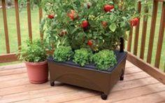 Come creare un orto in casa in poche semplici mosse Coltivare le verdure nel proprio terrazzo o balcone è possibile senza rovinare il design e la vista esterna. Basta avere un po' di spazio e una zona ben soleggiata. In pochi passaggi ti spiegherò com #ortometropolitano #giardino #terrazzo