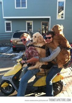 Two guys and two dogs. Only one scooter…