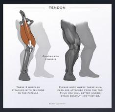 Human Figure Drawing Reference ArtStation - Few Tips , Arthur Gimaldinov - Figure Drawing Models, Human Figure Drawing, Figure Drawing Reference, Guy Drawing, Anatomy Reference, Drawing Tips, Drawing Faces, Leg Anatomy, Anatomy Art