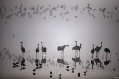 Israel sets an example in the protection of migrating birds » Focusing on WildlifeA flock of migrating cranes is seen at the Hula Lake ornithology and nature park in northern Israel. The Hula Valley is a stopping point for hundreds of species of birds along their migration route between the northern and southern hemispheres. Photo by Nir Elias/Reuters