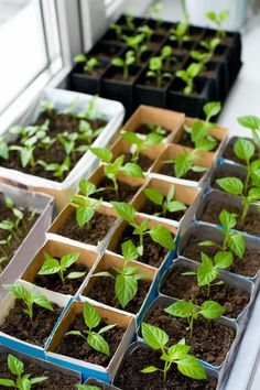 February Gardening Tips - What to Plant in February. Get your garden planning started. In some warmer locations you can begin sowing your vegetable seeds. Growing Tomatoes, Growing Herbs, Dried Tomatoes, Raised Garden Beds, Raised Beds, Organic Gardening, Gardening Tips, Indoor Gardening, Gardening Quotes