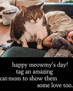 Memes, Cats, Happy, Holiday, Animals, Gatos, Vacations, Kitty Cats, Animaux