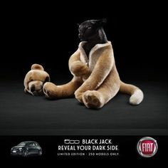 Fiat. A car ad that doesn't display the cat as the central subject.