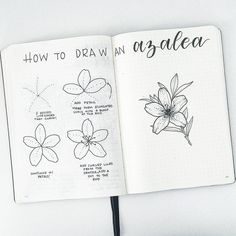 TUTORIAL TIME! I'm moving through my tutorial request list, and this week it's a azalea! . . . BONUS: I recorded a video of me drawing the flower on the right on my YouTube channel. If you ever want to see more detail in the tutorials, this is your chance! Go check it out, the link is in my bio. If you enjoy it, like the video so I know to do more of them. Don't forget to subscribe! . . . #bujo #bujoaddict #bujojunkies #bujolove #bujoinspo #bujocommunity #bulletjournal #bulletjournaljun...