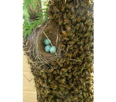 This is amazing. A birds's nest in the middle of a swarm!  Isn't nature wonderful?