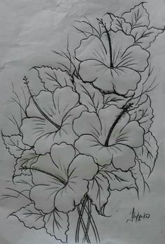 Best Pics Hibiscus dessin Suggestions Improve sultry hibiscus regarding a large, vivid appearance in your yard, porch or perhaps patio. Pencil Art Drawings, Drawing Sketches, Drawing Pin, Art Paintings, Acrylic Paintings, Fabric Paint Designs, Flower Sketches, Drawing Flowers, Hibiscus Drawing