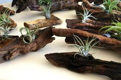 Decorating With Air Plants: DIY Garden Project. birdsandblooms.com