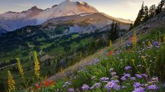 printemps-Washington