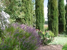 Colorful, xeric perennials contrasted beautifully with an Italian cypress allee.