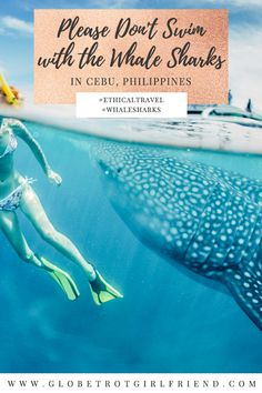 And so we give you reasons why you shouldn't swim with the whale sharks in Cebu, Philippines. Asia Travel, Travel Tips, Travel Plan, Phuket, Bali, Cebu, Cool Places To Visit, Philippines, Shark