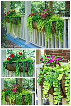 Container Gardening MUST PIN post for awesome curb appeal! Best ideas for hanging baskets to turn your front porch planters into instant WOW! DIY flower baskets that you can make this weekend! // 3 Little Greenwoods - Planters - ideas of Planters Front Porch Planters, Deck Railing Planters, Front Porch Flowers, Summer Front Porches, Front Porch Garden, Porch Railings, Small Front Porches, Balcony Flowers, Balcony Deck
