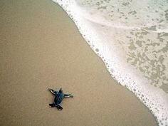 sea turtle tracks beach sand | ... newly hatched baby leatherback sea turtle makes his way to the shore