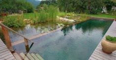 Natural Pools: A Sustainable Alternative To Chlorine