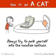 Comment être un chat pour les nuls  Dessein de dessin