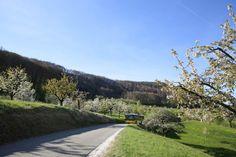 Wanderung Kirschblüten Weg in Nuglar - St. Pantaleon im Kanton Solothurn. Schöner Fotospot fürs Fotografieren von Frühlings Blüten. Wander Tipp Frühling.