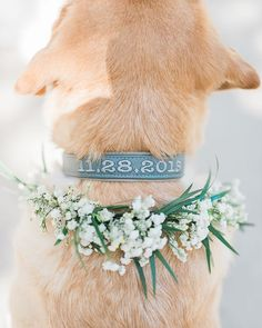 Puppy love.  If you have a furry friend and you can bring them to your wedding you definitely should. After all they are family but…