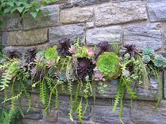 succulent wall perch. It doesn't require much water, perfect for low maintenance gardening!