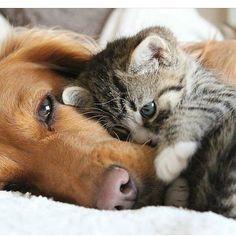 Ce chien et Ce Chat s'aime            Trop Choux!