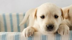How to potty train a puppy: Everyone will be happier if you reinforce good habits starting at Day One. #pets #dogs #puppy