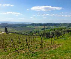 The Wine Vineyards of Tuscany, Italy