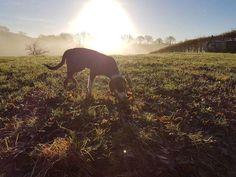 Al wandelend met haar hond staat Claudia stil bij 2016. Lees haar (kerst)gedachten in de nieuwe blog