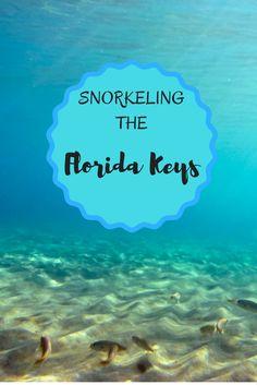 SnorkelingThe Florida Keys.