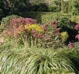 Late Blooming Perennials for Fall Gardens