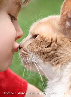 Cats for kids - a guide to the best cat breeds for children