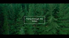 Flying through the forest on Vimeo