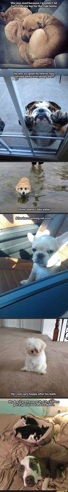 Dogs who are just not having the best day