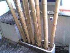 bambu .