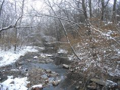 Flat Branch Creek Picture a Day, Tunnel of Love, December 16th 8am - about 1/2 hour after sunrise