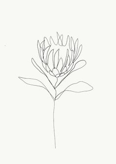 4d206f426 simple drawing protea - Google Search Line Drawing Tattoos, Tattoo  Drawings, Line Drawing Art