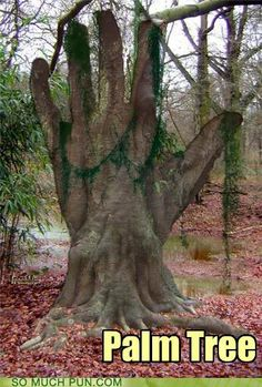 Secrets To Getting Your Girlfriend or Boyfriend Back - Reaching out. Would love to have praying hands out of the trees in my back yard! How To Win Your Ex Back Free Video Presentation Reveals Secrets To Getting Your Boyfriend Back Weird Trees, Tree People, Tree Carving, Old Trees, Unique Trees, Nature Tree, Tree Forest, Land Art, Tree Art