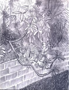 David Hockney, Cactus and Wall, 2000 charcoal on paper, 22 in. David Hockney Landscapes, David Hockney Art, David Hockney Ipad, Pop Art Movement, Gravure, White Art, Illustrations, Painting & Drawing, Art Drawings